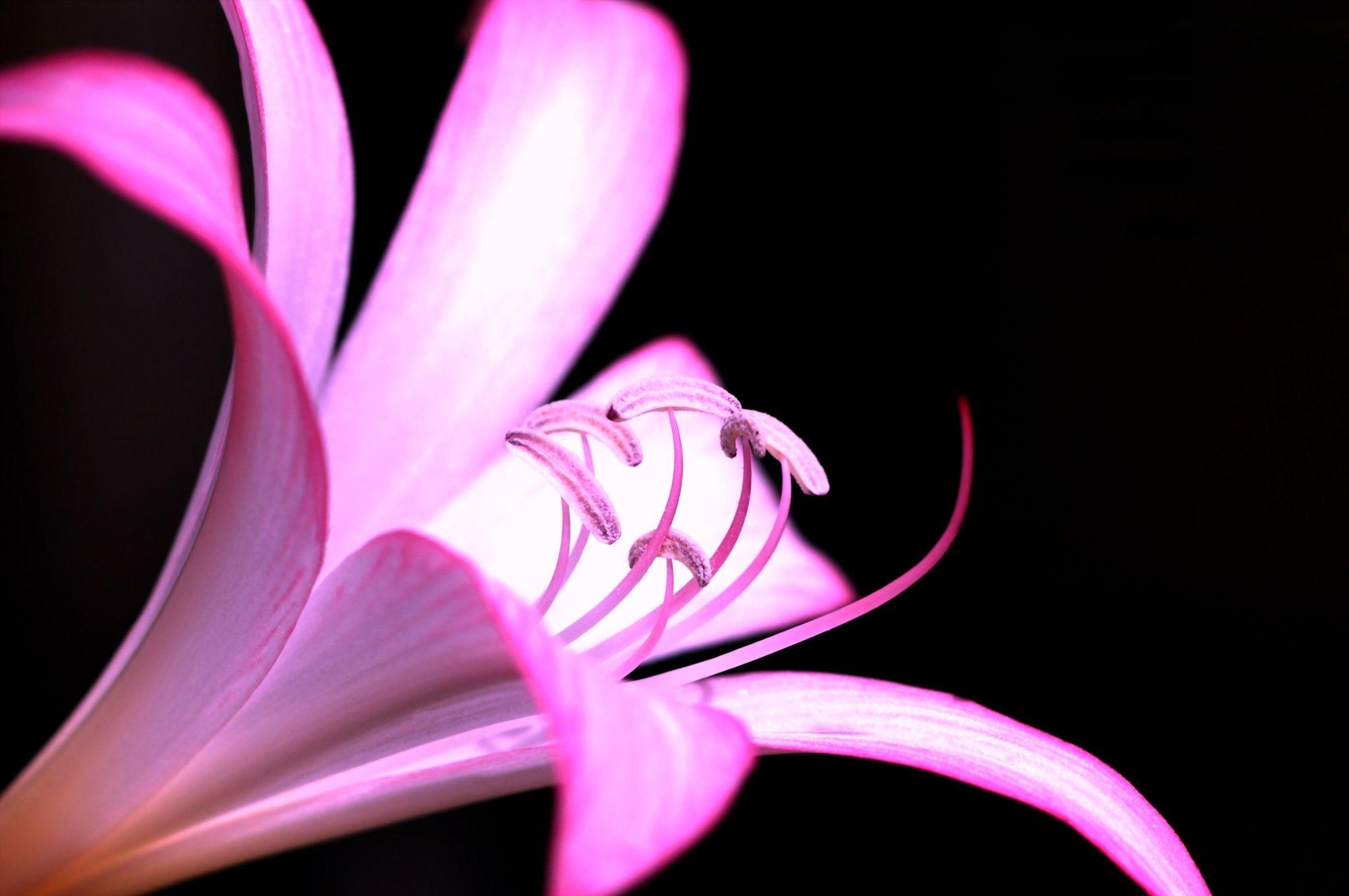 Pink widescreen desktop wallpaper ololoshka pinterest