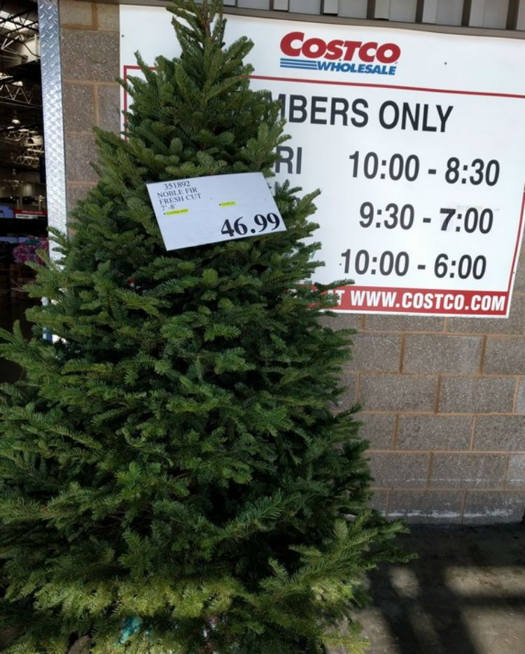 The Ultimate #Christmas Tree Buying & Care Guide | Some Costco stores sell 7-8 foot trees for as low as $32! And they're great quality. Check your local store for fresh-cut trees.