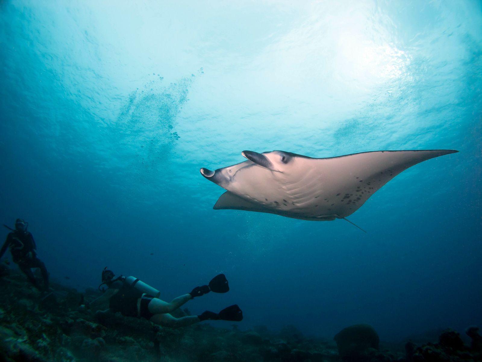 Dive Site Manta Point Addu Atoll Maldives Scuba Diver Life Addu Atoll Best Scuba Diving Maldives