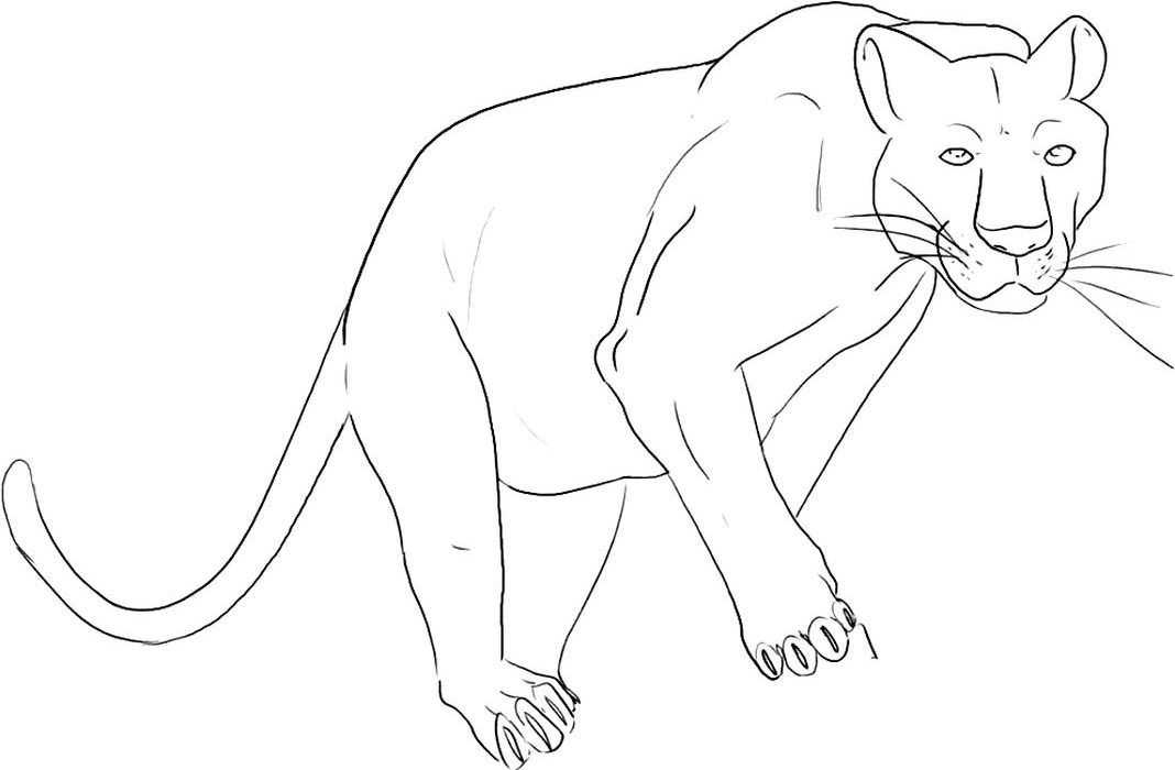Black Panther Animal With Wings Coloring Pages Avengers Coloring Superhero Coloring Pages Black Panther Comic
