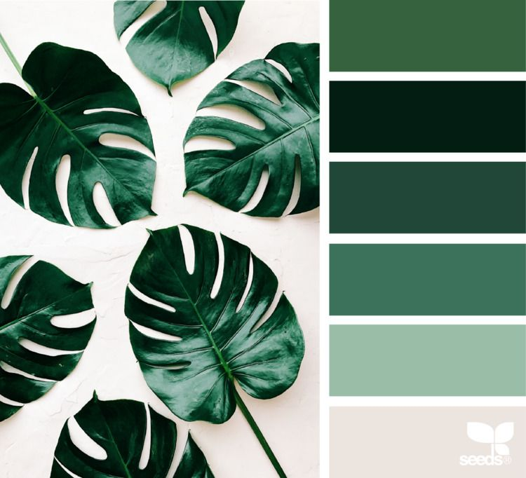 Design Ello Green Colour Palette Nature Color Palette Seeds