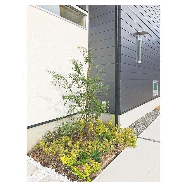 Photo of ハイノキとは?植木でも人気な植物の特徴と育て方を解説!手入れのコツは?