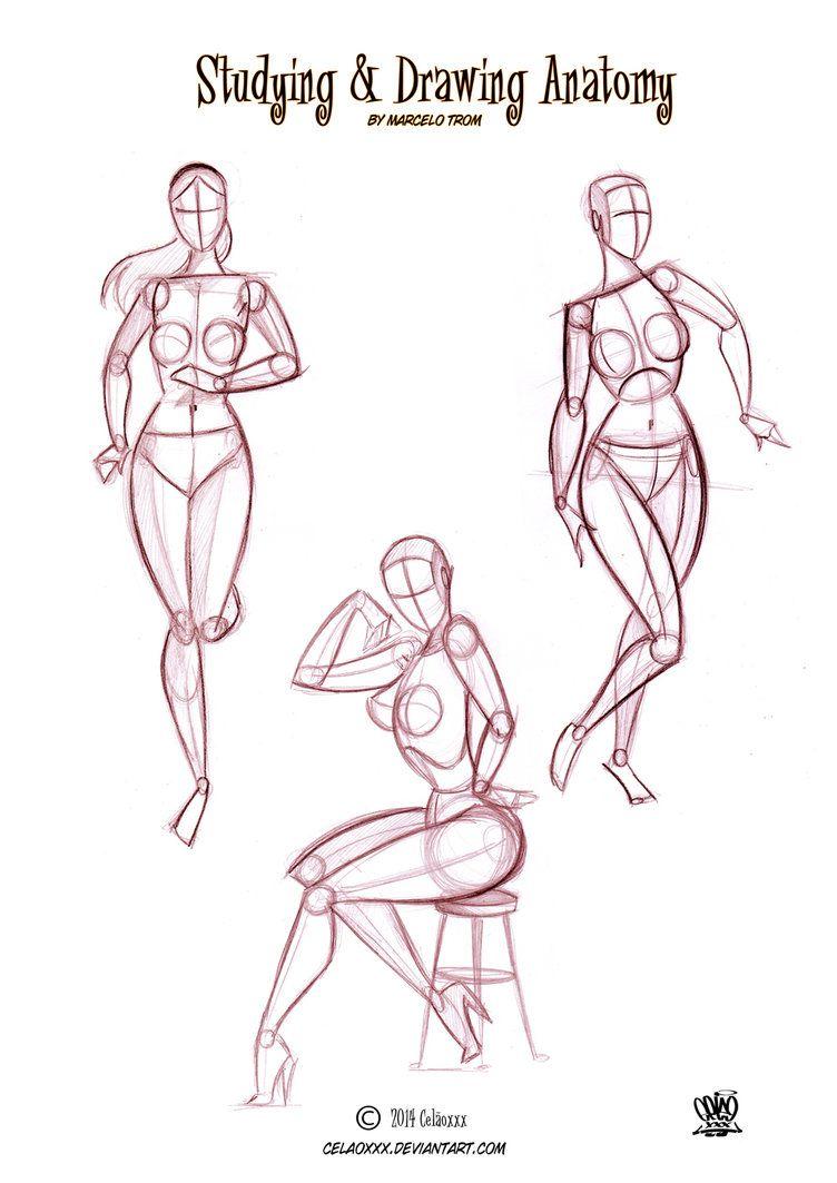 Anatomy For Artists By Celaoxxx Page 2 By Celaoxxx On Deviantart