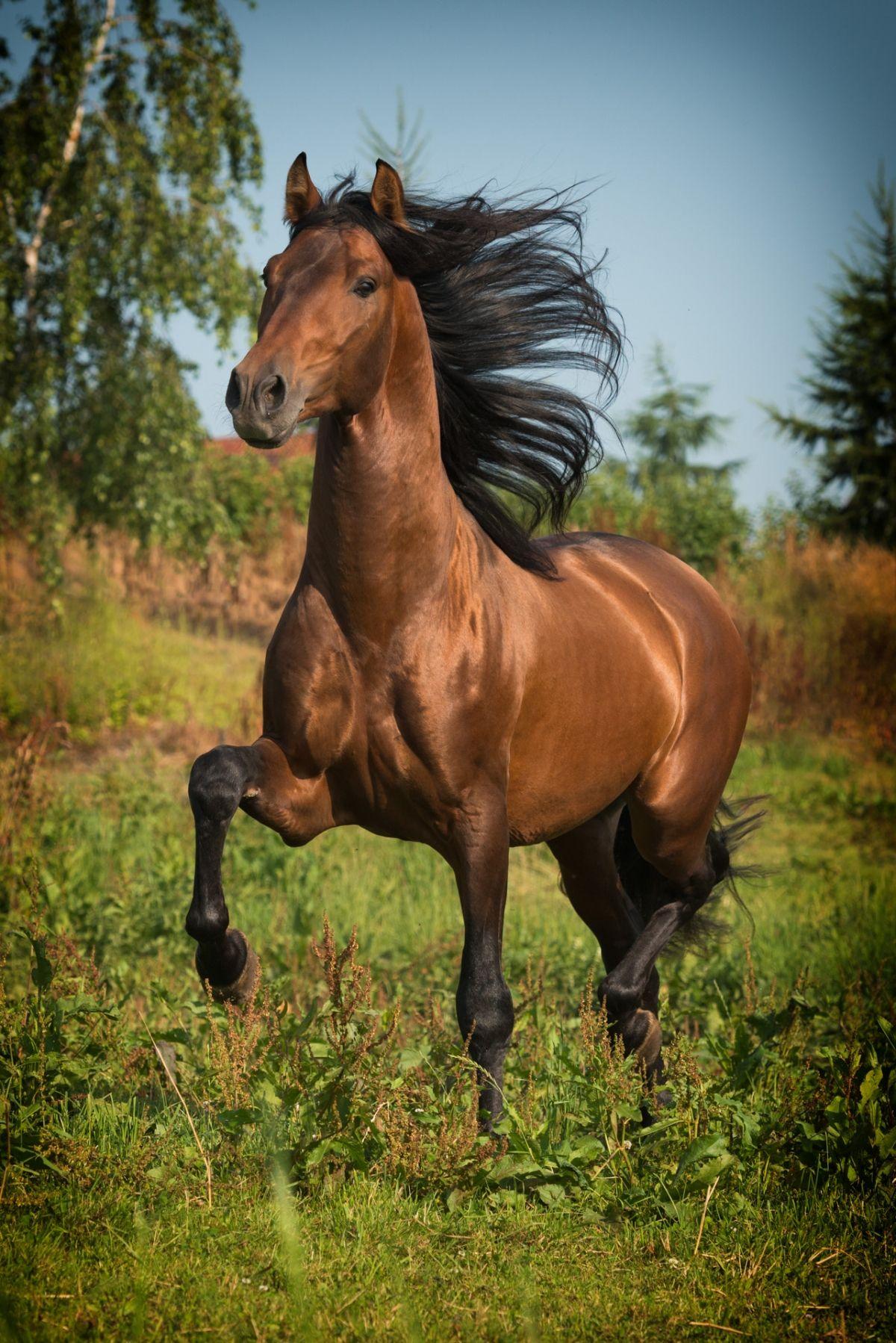 Pferdefotografie & HundefotografieEinzigartige