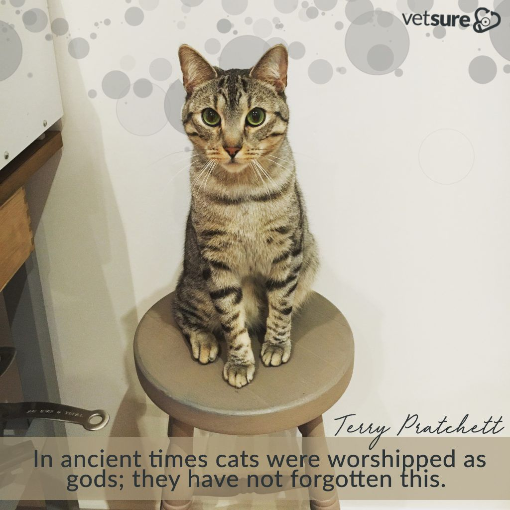 Vetsurepet In Ancient Times Cats Were Worshipped As Gods They Have Not Forgotten This Terry Pratchett Tuesdaythou Dog Insurance Sick Pets Pitbull Puppy Care