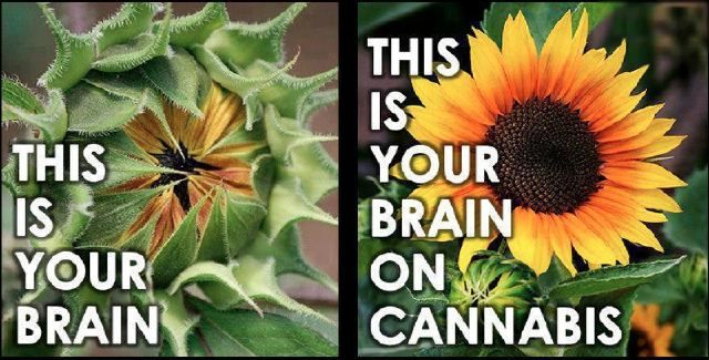 Image result for THI IS YOUR BRAIN ON WEED