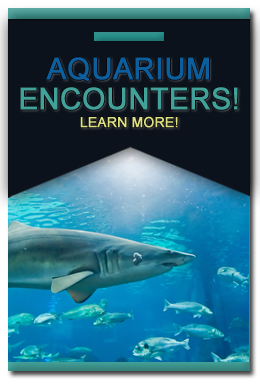 Florida Keys Aquarium Encounters Day Trip Or Potential Place For Catered Dinner