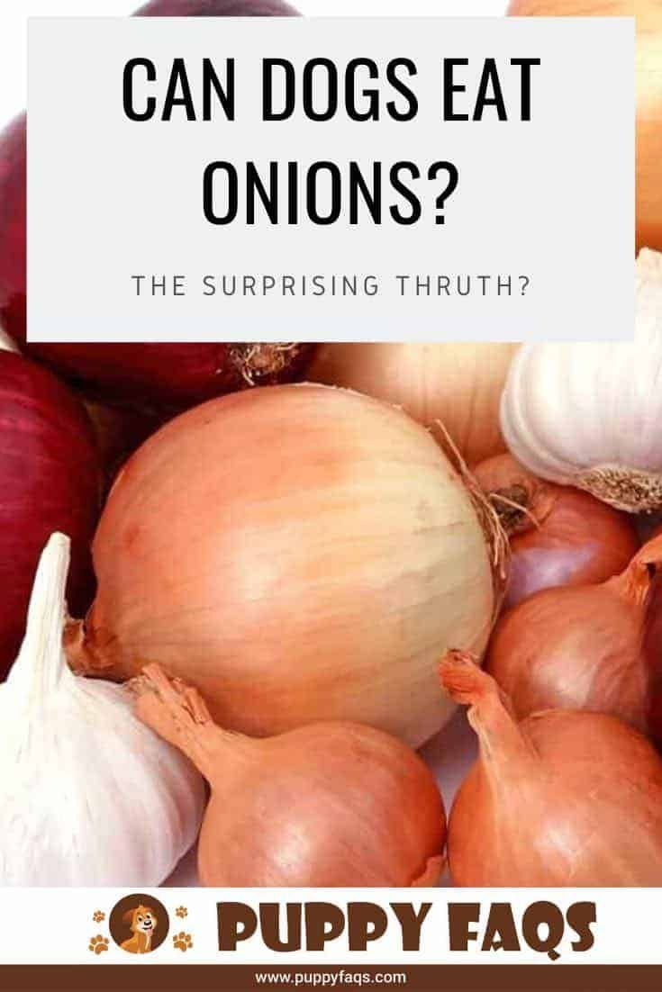 how poisonous is onion to dogs