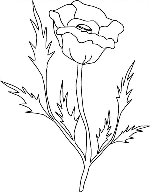 California Poppy With Pointy Leaves Coloring Page California Poppy Drawing Poppy Coloring Page Leaf Coloring Page