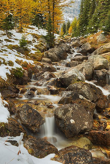 larch valley stream - Google Search