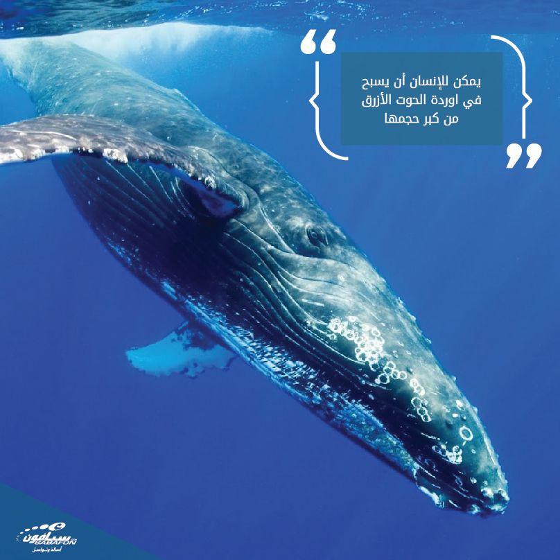 اوردة الحوت الأزرق كبيرة جدا لدرجة أنه يمكن للإنسان السباحة فيها حقيقة Strongest Animal Animals Of The World Animals