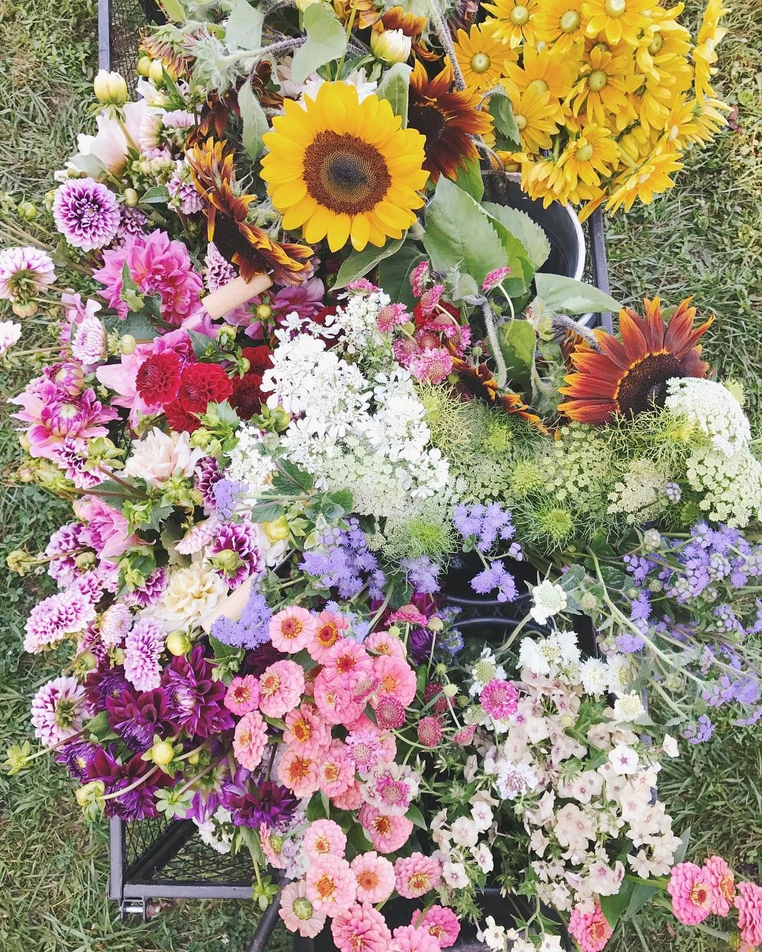 All The Different Types Of Flowers We Picked Yesterday