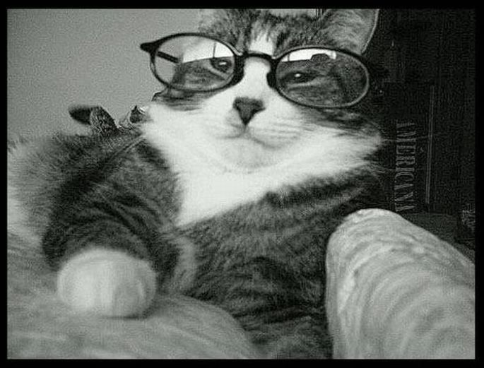 Funny – Animals Wearing Glasses (17)