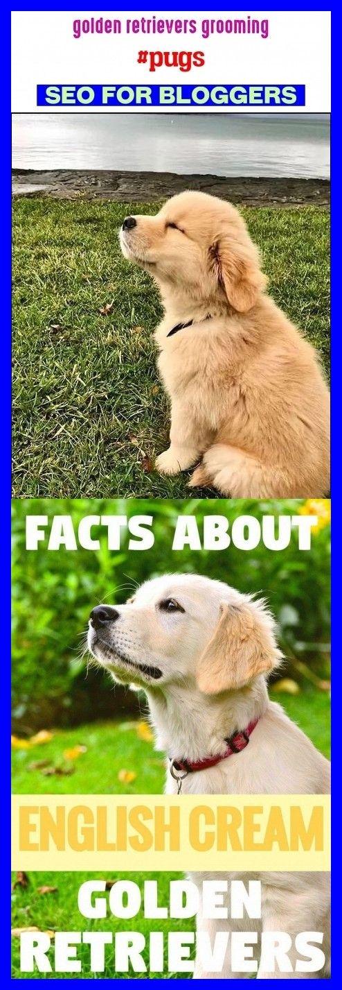 Golden Retrievers Grooming Pugs Seotrends Trending Golden