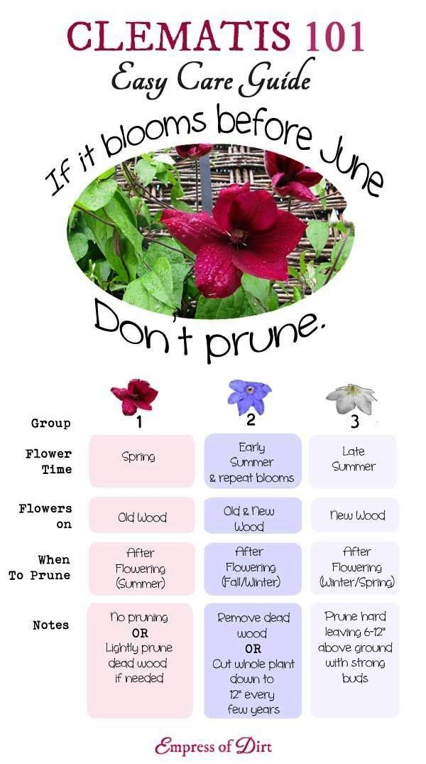 101 Easy Care Guide  Clematis 101 Easy Care Guide  Clematis is one of the mostloved garden vines yet its not always Clematis 101 Easy Care Guide  Clematis 101 Easy Care G...