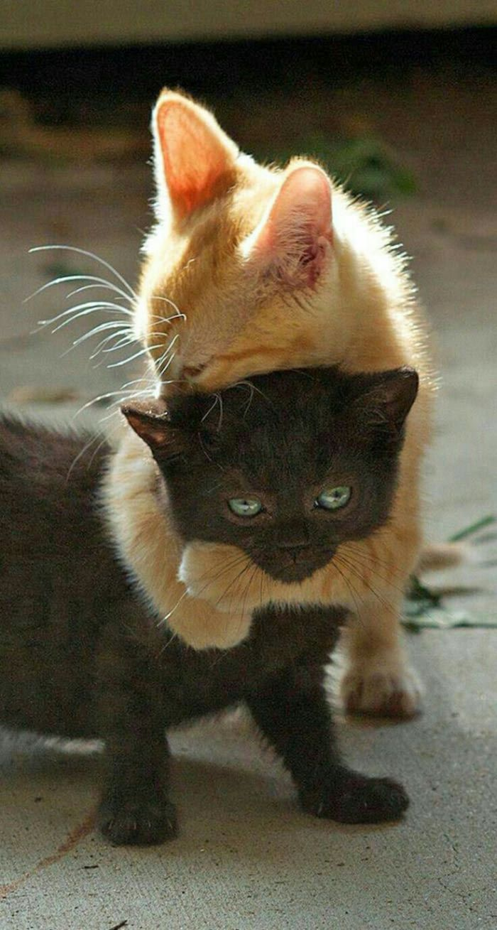 Cuteness Overload Cute Cats Cats And Kittens Kittens Cutest
