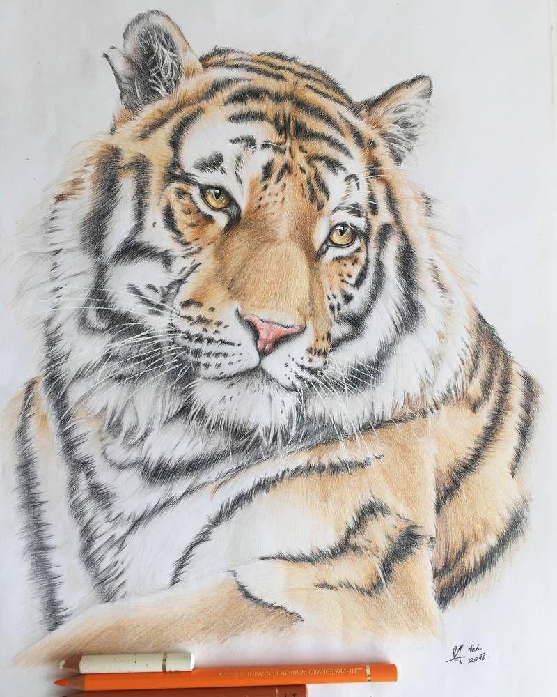 Tiger by LaetitiasPortraits on DeviantArt