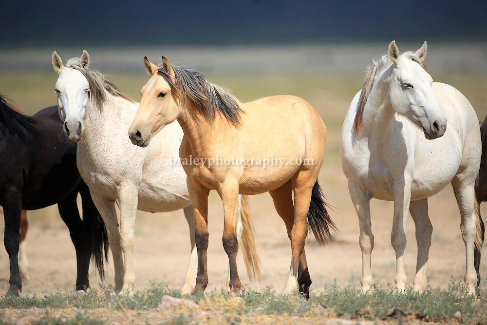 wild,mustangs,horses,Utah wild horses,equus, | COLIN E BRALEY ...