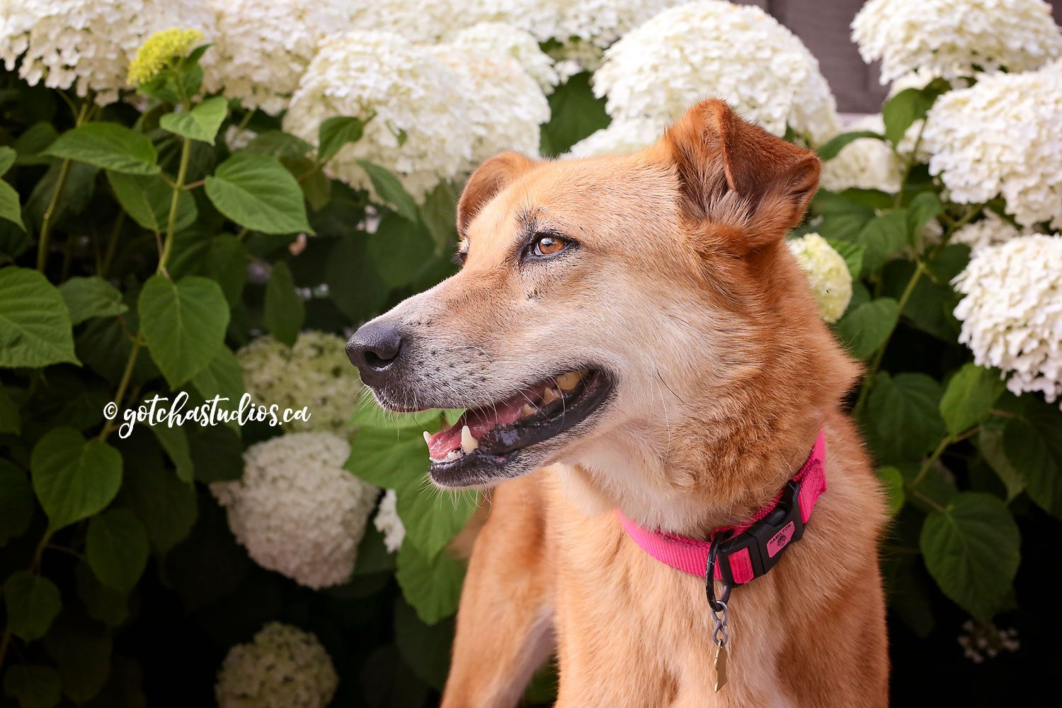 SHILA Dog Tales in King City, Ontario ADOPT OR FOSTER