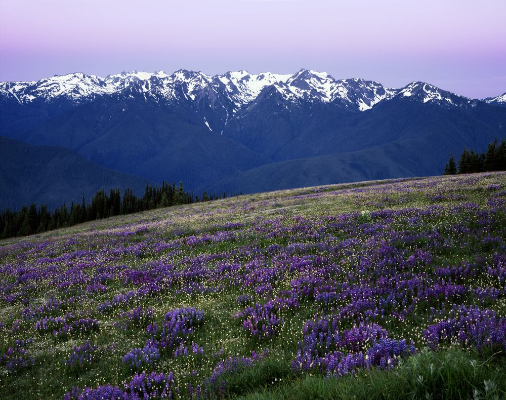 Olympic National Park World Heritage Routes Travel