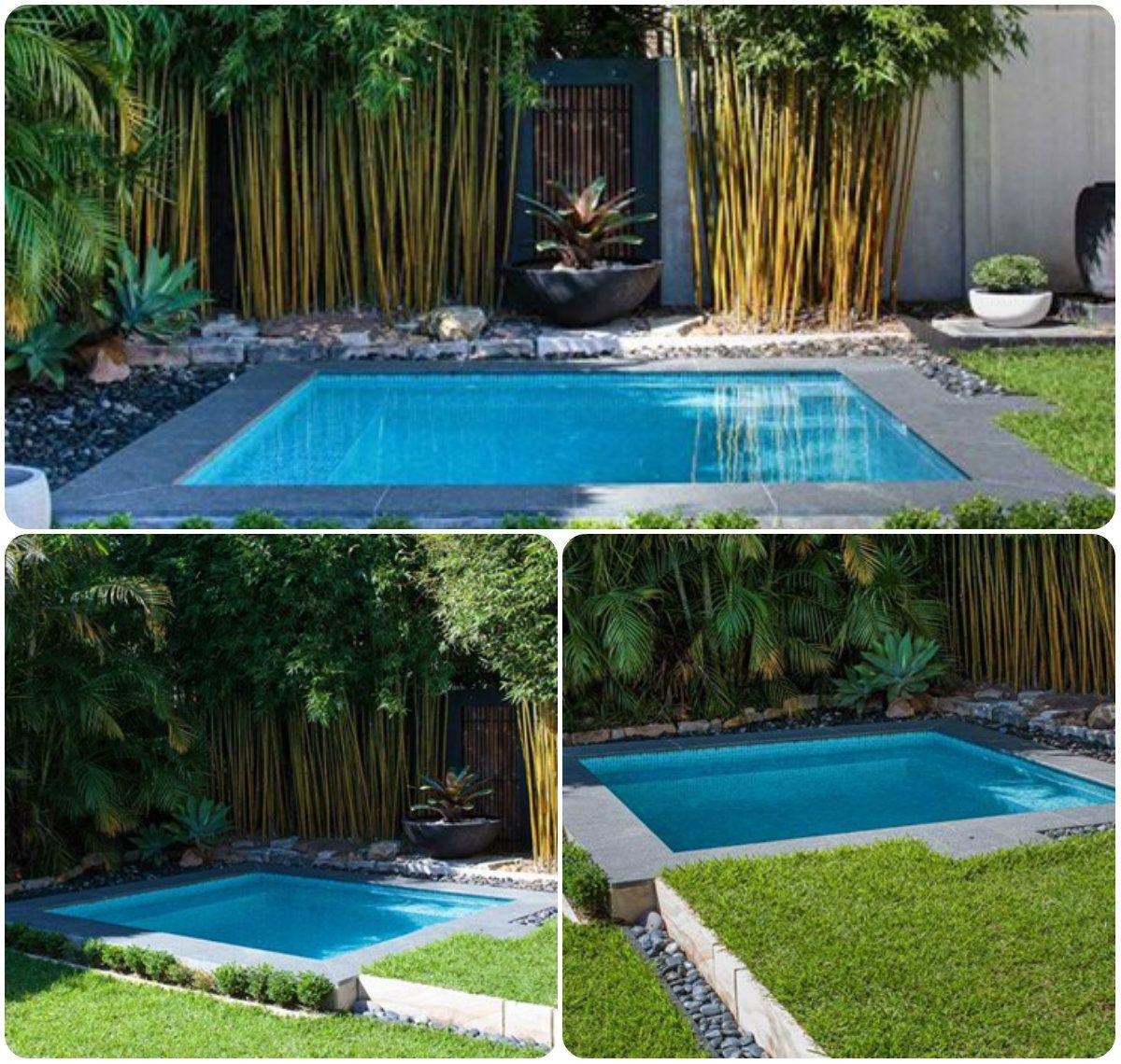 Roseville Plunge Pool Plunge Pool Pool Pool Designs