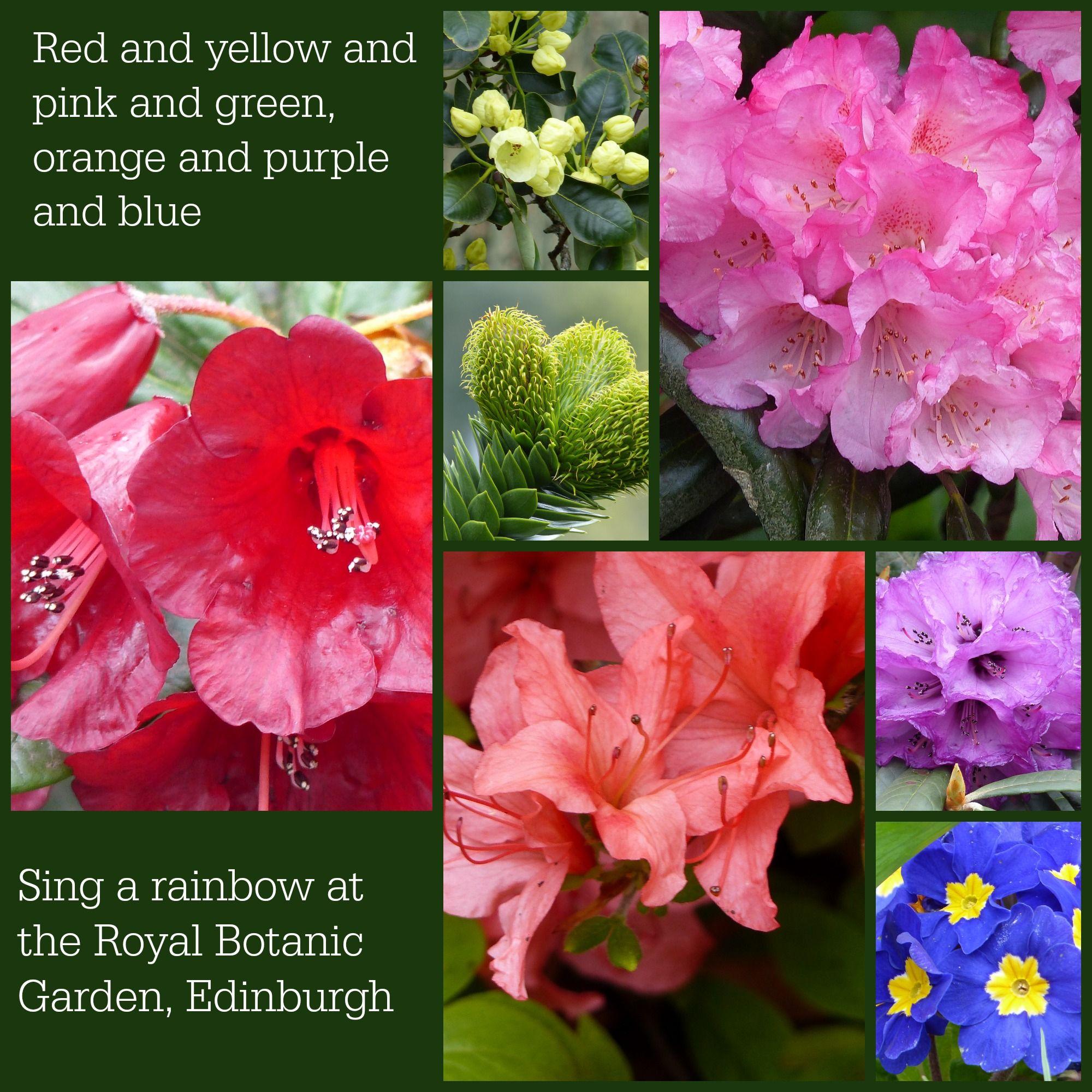 A rainbow of flower colours at the Royal Botanic Garden, Edinburgh ...