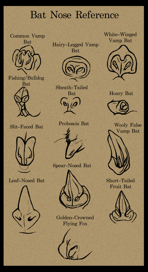 how to draw a bat nose - Google Search | Beautiful Flyers ...