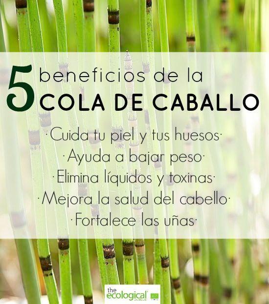 Beneficios De La Cola De Caballo Hierbas Curativas Alimentos Nutricionales Nutricion Y Salud Consejos