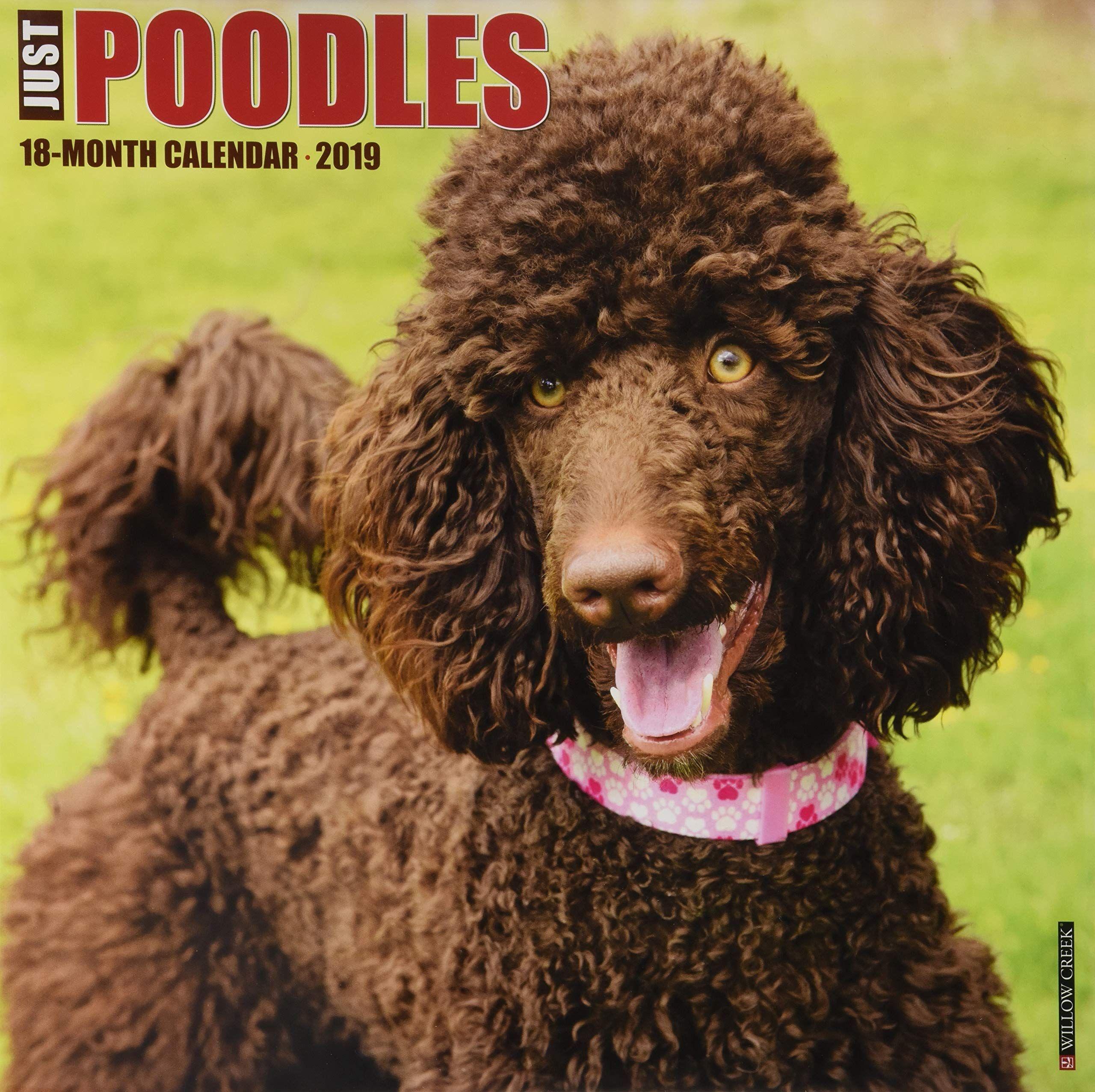 Just Goldendoodles 2019 Wall Calendar (Dog Breed Calendar