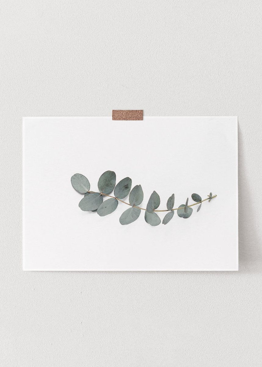 Eucalyptus Print, Botanical Print, Botanical Wall Art, Horizontal Print, Horizontal Wall Art, Eucalyptus Leaves, Botanical, Wall Art Print is part of Living Room Art Botanical - HEARTSinCOLOURS Thank you for visiting our shop