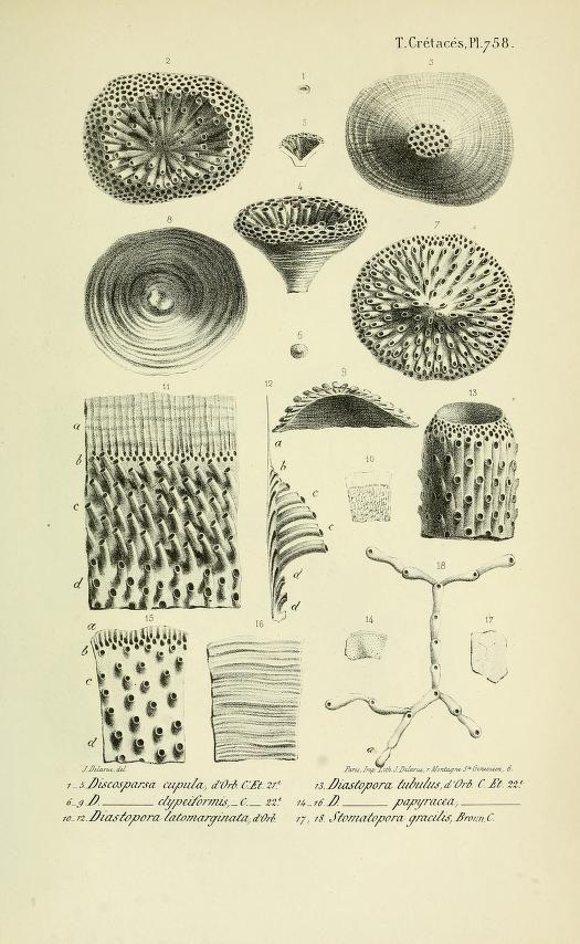 Photo of ser. 1, Cretaces, t. 5, Atlas – Paléontologie française : – Biodiversity Heritage Library