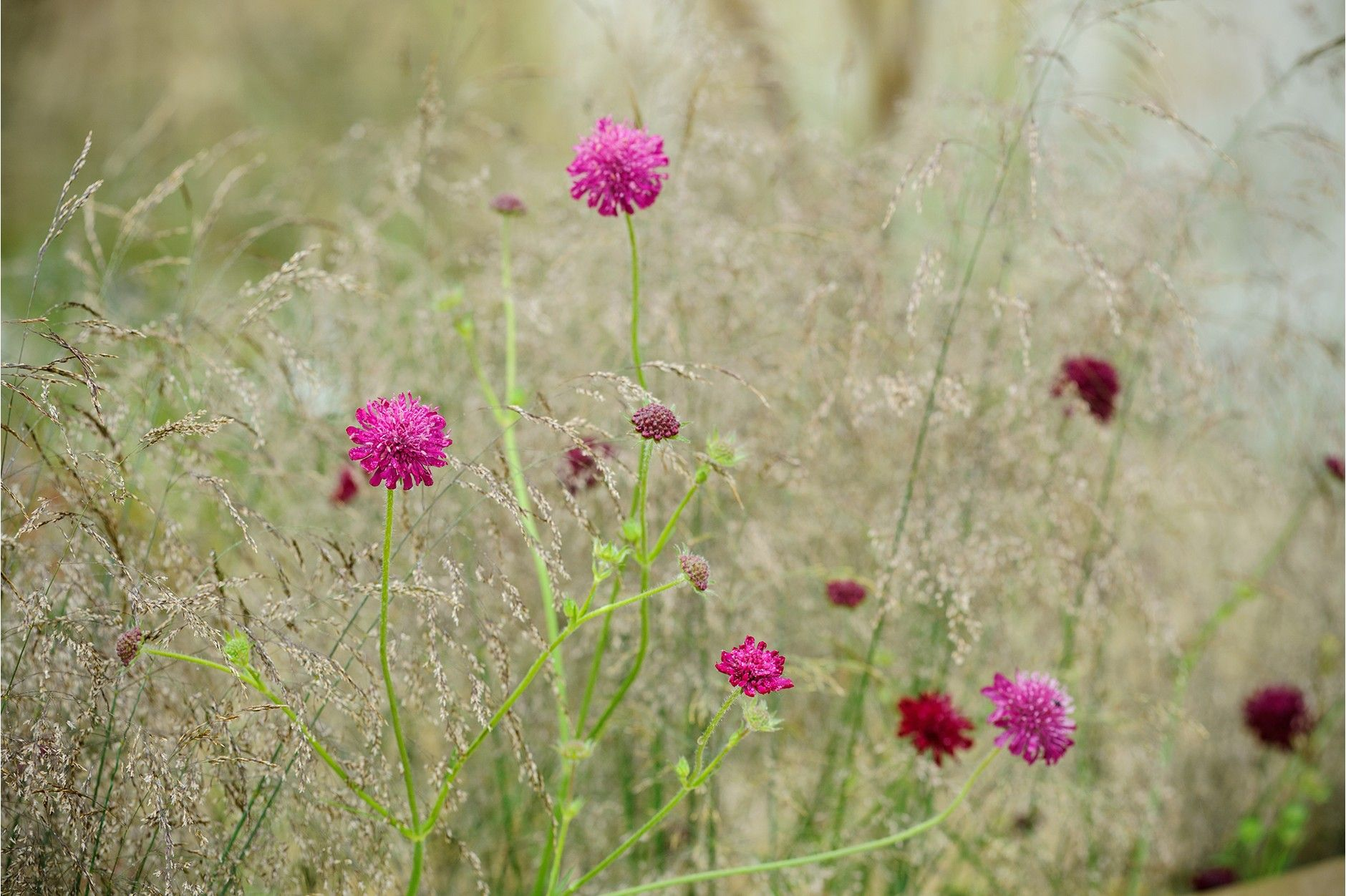 how to plant grass seed on dry dirt