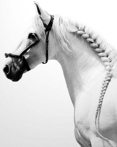 Magnifique cheval blanc la crini re tress e amours d - Barbie chevaux ...
