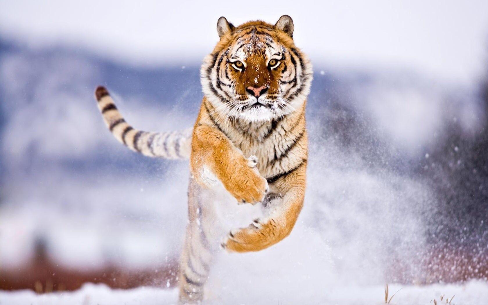 104 Gambar Binatang Paling Keren HD Terbaru