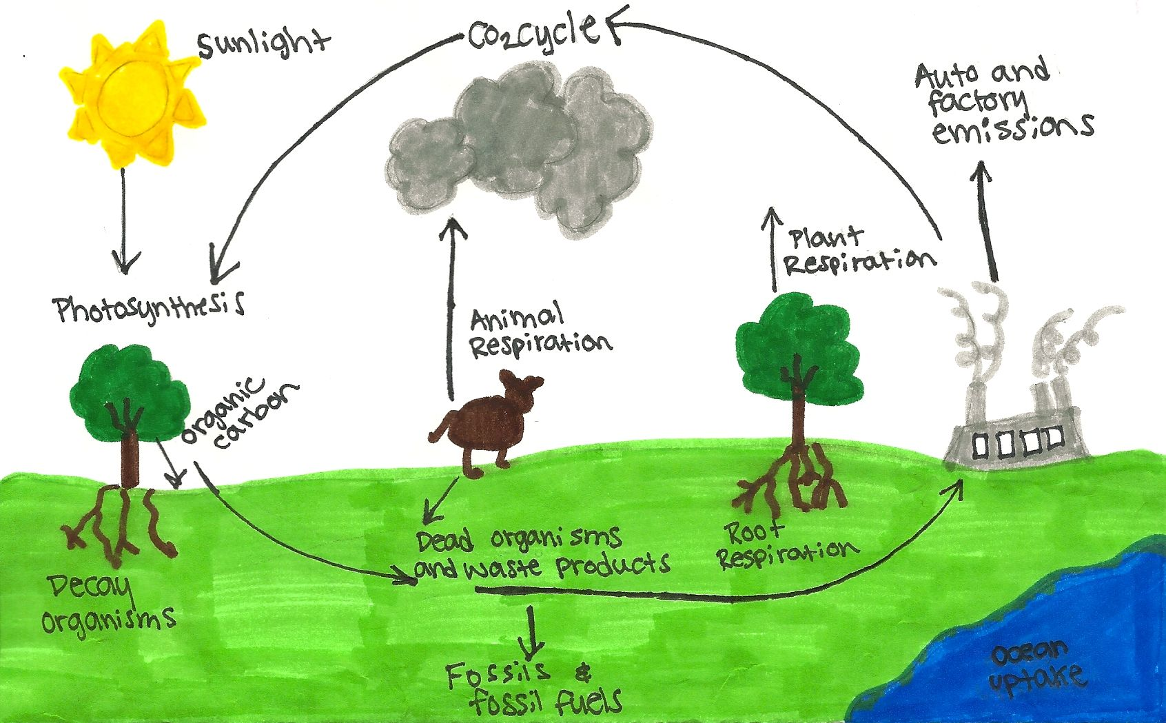 The Carbon Cycle,Carbon Dioxide -Cycle ( CO2 ) - YouTube
