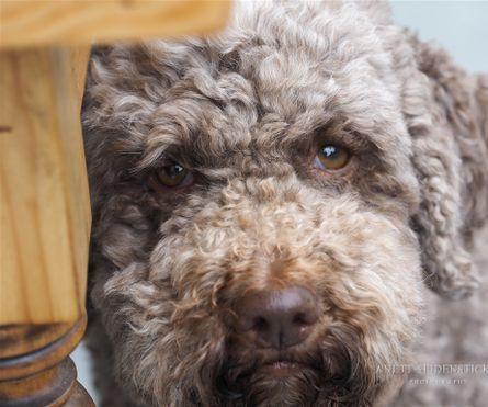 Seidensticker / Podgi und Beppa Dogs, Animals