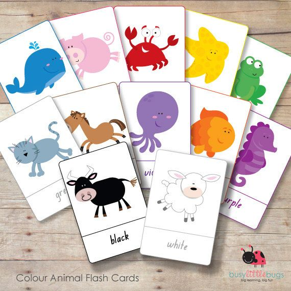 Colour Animal Flash Cards Animals Colours Preschool Learning Flash Cards Children S Colours Animal Flashcards Flashcards Color Flashcards