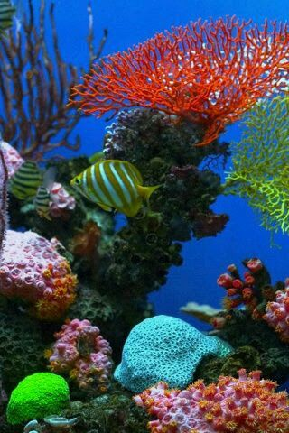 ayari g vida marina meerwasser aquarium unterwasser y meerwasser. Black Bedroom Furniture Sets. Home Design Ideas