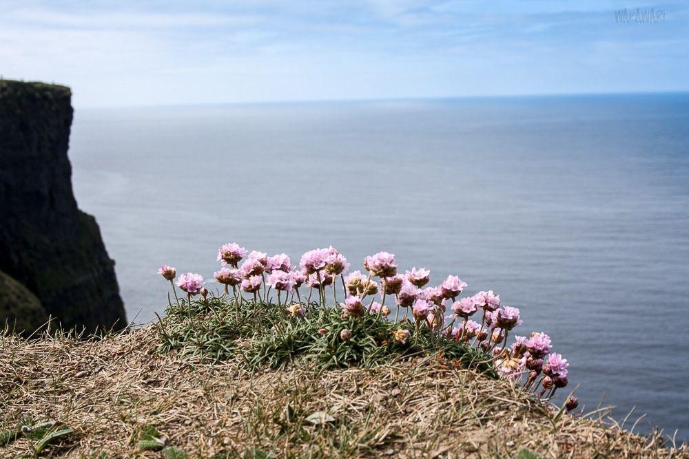 Die Cliffs sind einer der beliebtesten Drehorte für Filme in Irland. Sie wurden unter anderem für Szenen in  Harry Potter und der Halbblutprinz, Hear My Song und Die Braut des Prinzen verwendet. Ihr wollt noch mehr übe rdie Cliffs wissen? Dann lest meinen Reisebericht: https://www.facebook.com/wakawariBlog/posts/443813962446169