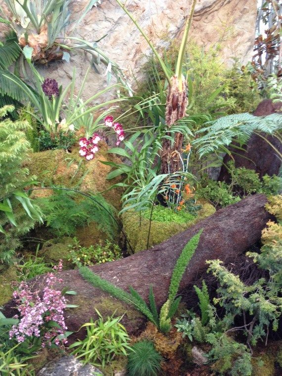Great exhibit at the SF Conservatory of Flowers Indoor