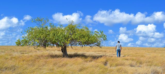 tergoda padang rumput dan ternak sumba timur padang and indonesia