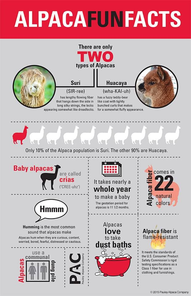 Alpaca fun facts - via Pauley Alpaca Company on FB