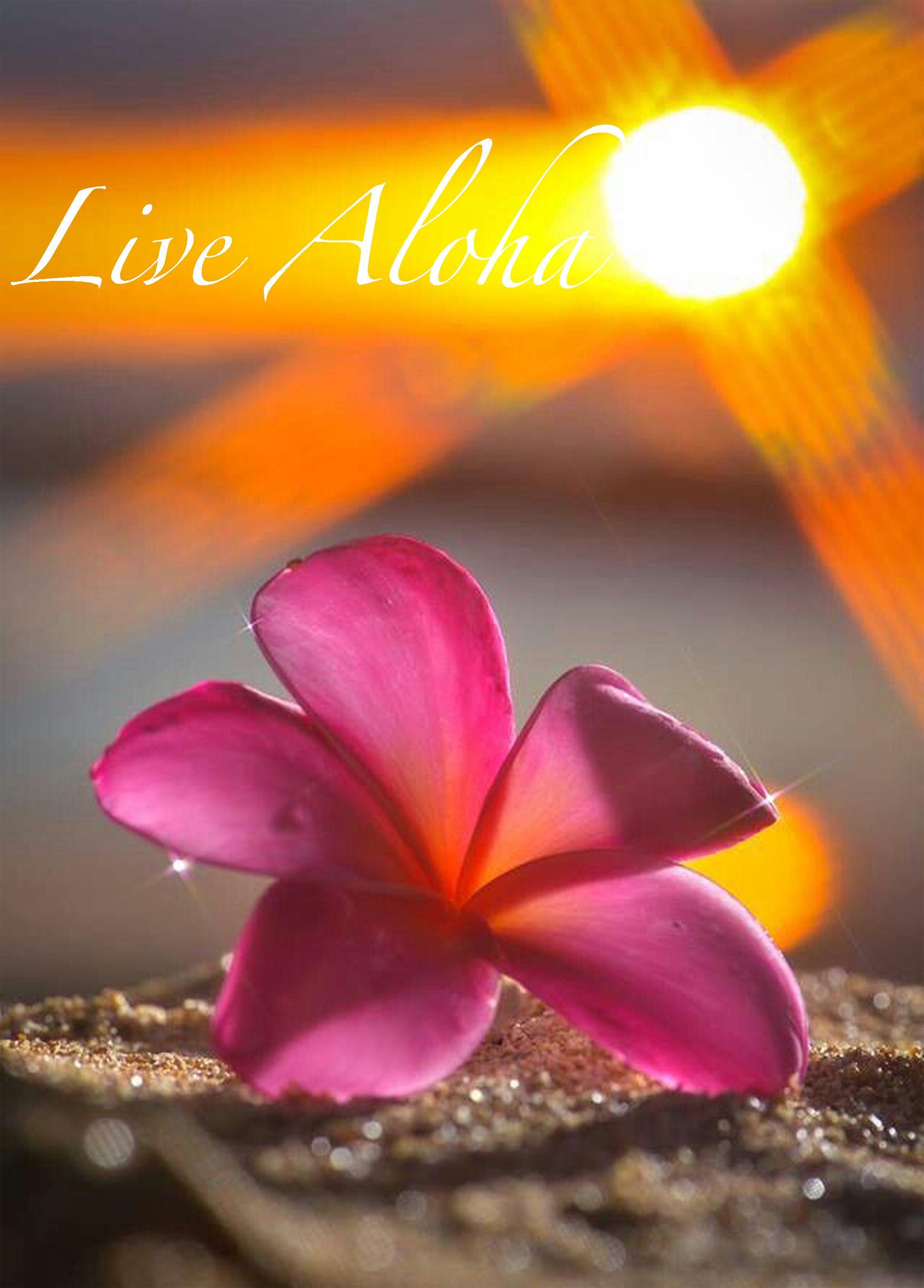 Live aloha aloha pinterest hawaii hawaiian and hawaiian live aloha izmirmasajfo