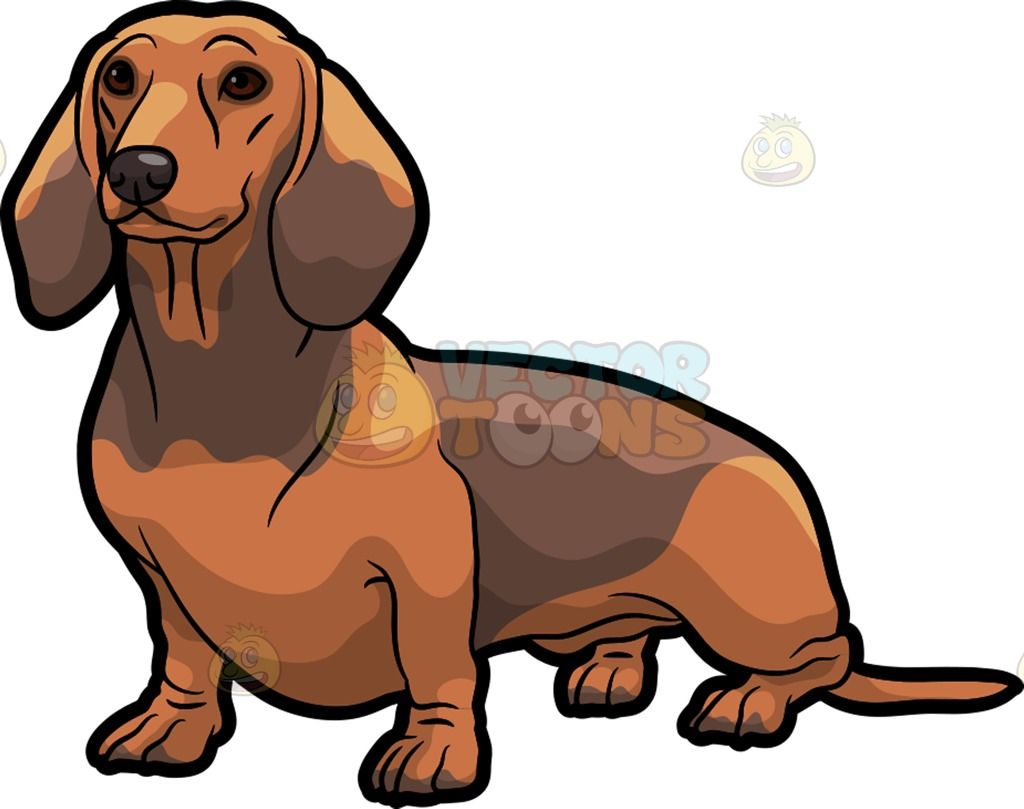 Simple Fur Brown Adorable Dog - dc73f3066556f819c55e717588bb5f97  Perfect Image Reference_914076  .jpg