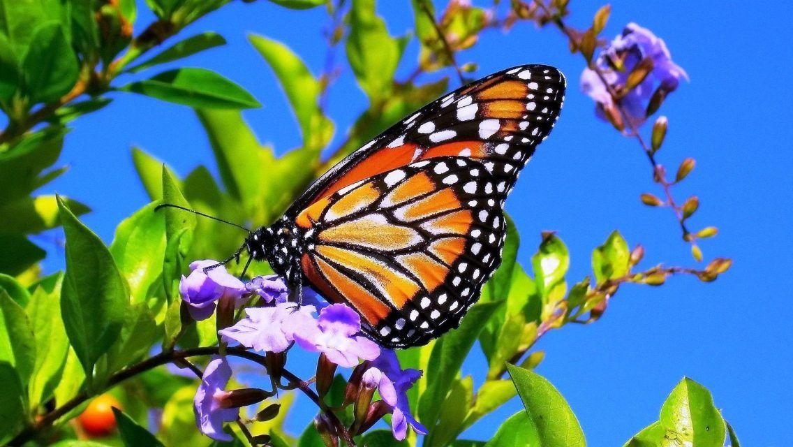 Spring Flowers And Butterflies  wallpapers desktop background #blueflowerwallpaper