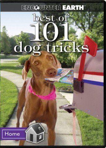 101 Best Dog Tricks Dog Hacks Cool Dog Tricks Dog Training