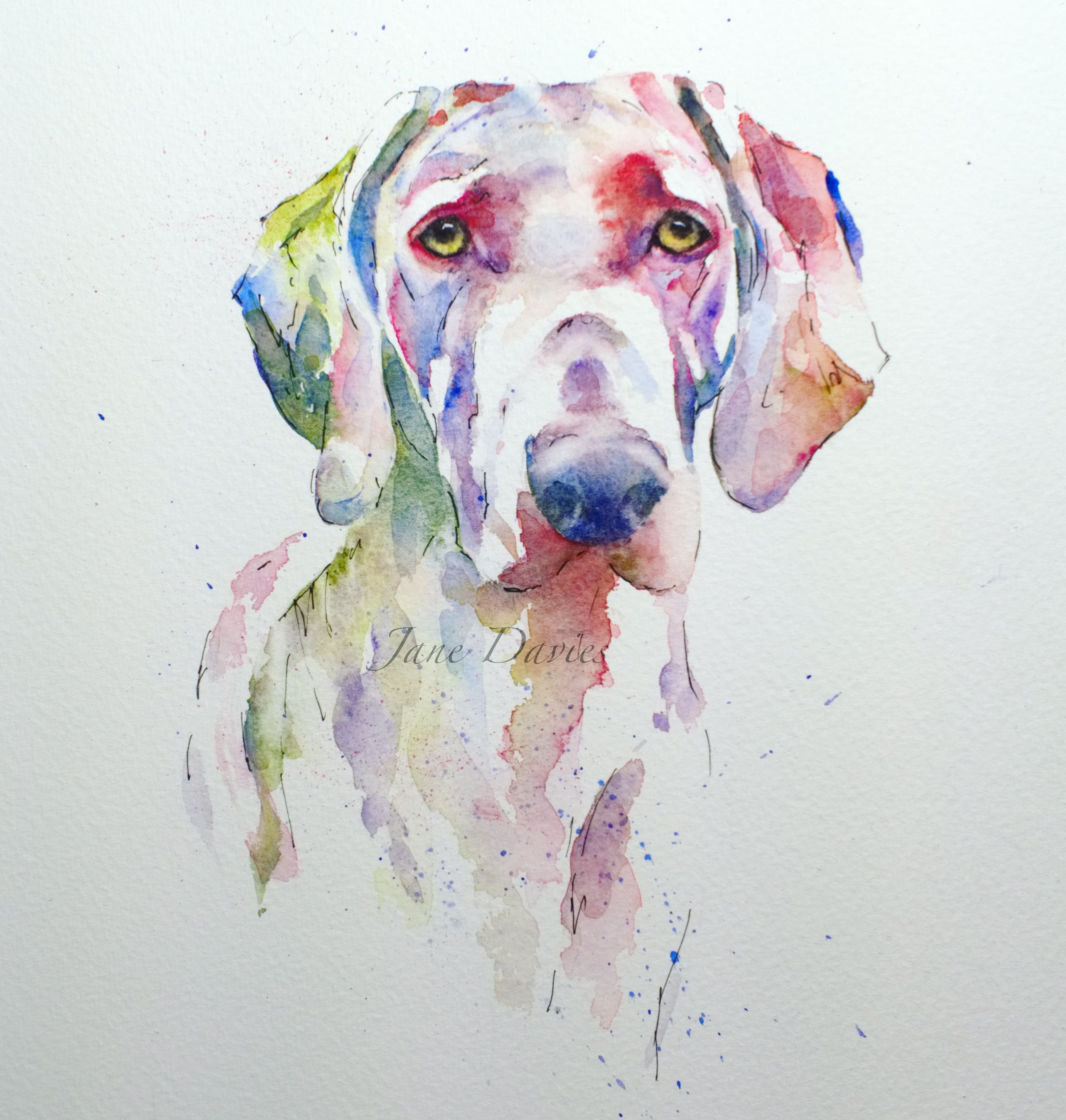Pet Portrait Of A Weimaraner Painted By Watercolour Artist Jane