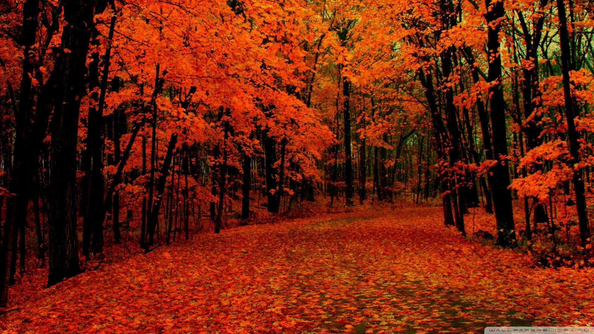 fall path wallpaper 1080p hd