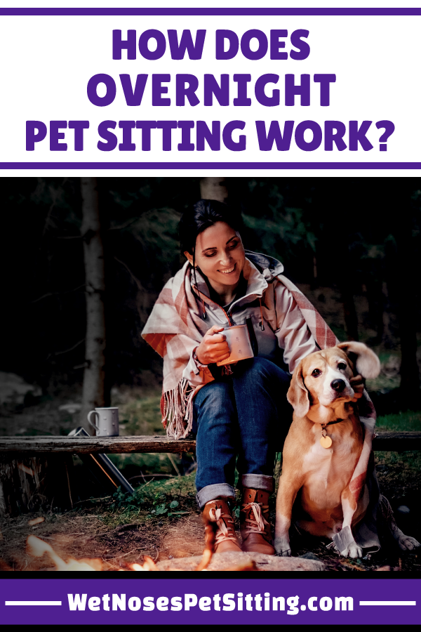 How Does Overnight Pet Sitting Work Pet Sitting Dog Sitters Near Me Pets