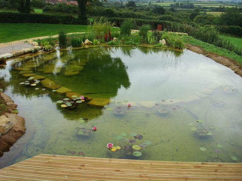 Photo Gallery Natural Swimming Pool Ponds Total Habitat Natural Swimming Pools Natural Swimming Ponds Swimming Pool Pond